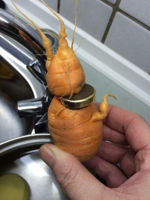 Anillo entre una zanahoria