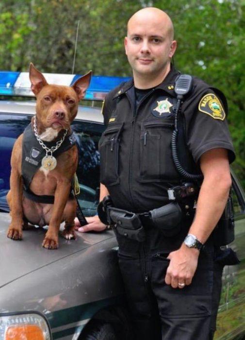perros policias