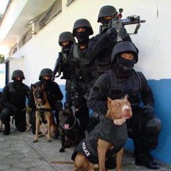 policias pitbull