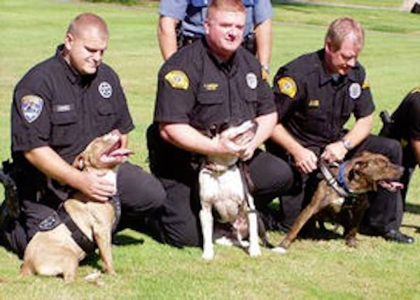 pitbulls policia