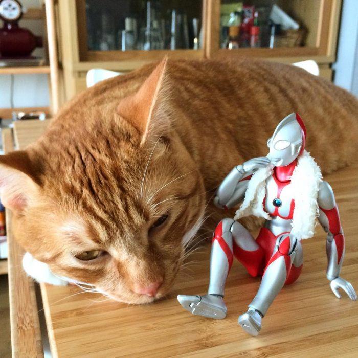 gato Koma Ultraman h