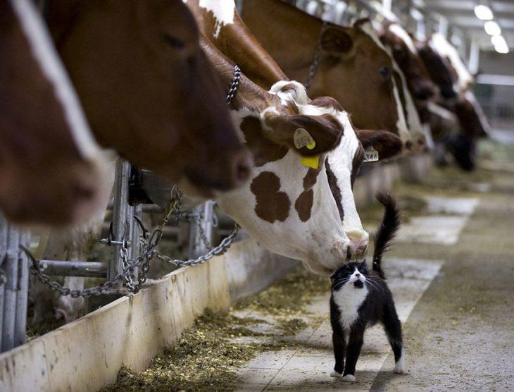 Reuters Vacas