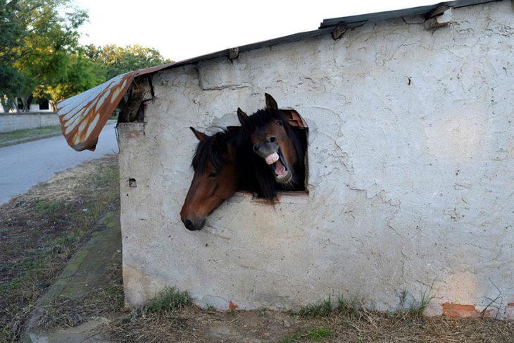Reuters caballos