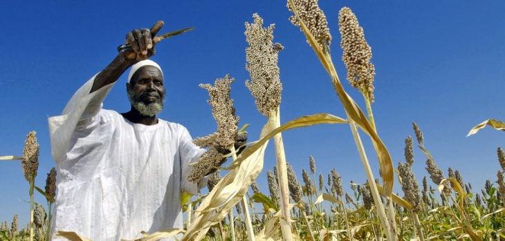 Campesino en Sudán