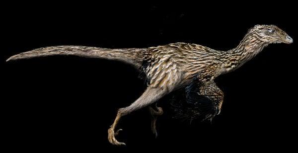 Así se vería un Coelurosaurio