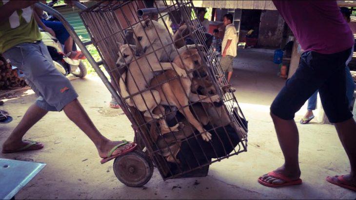 perros festival yulin