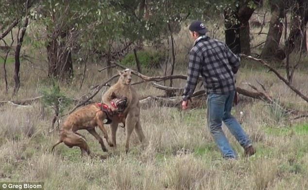 canguro y perro