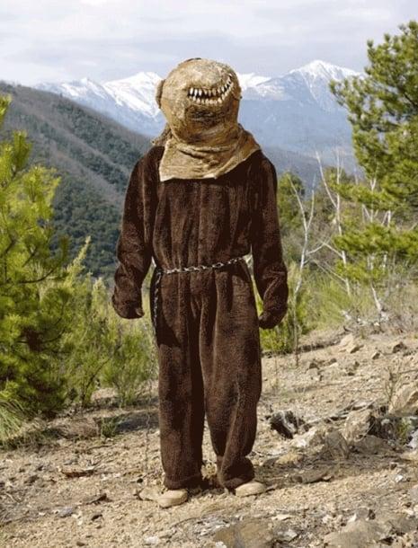 oso pirineos