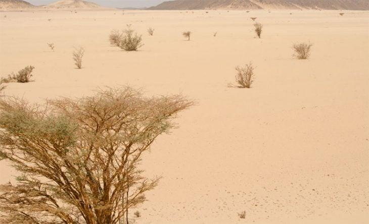 Desierto de Sudán