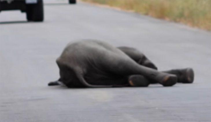 Pequeño elefante en la carretera