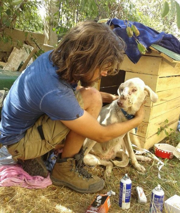 turco y perro sin hogar