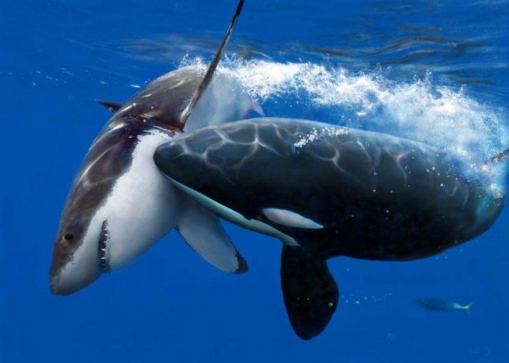 ballena tiburon