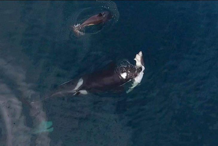ballena cazando