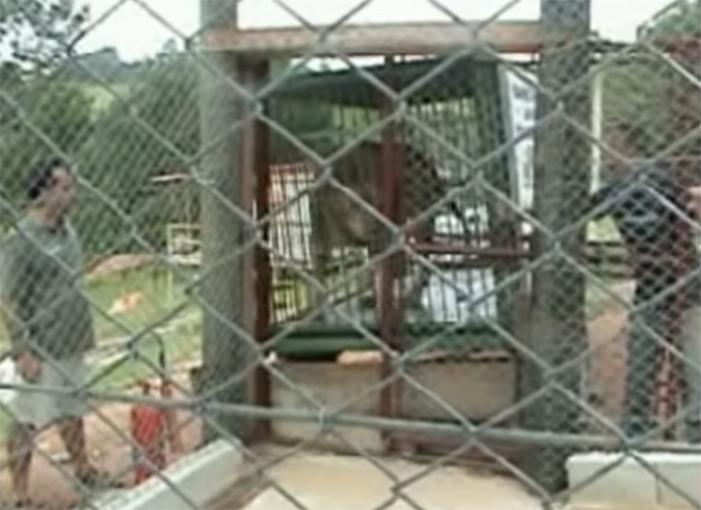 León de circo es liberado