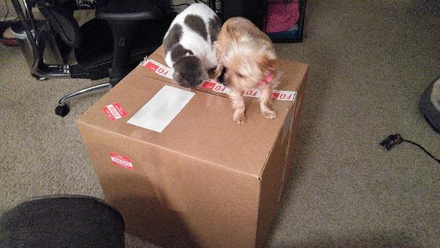 perros caja