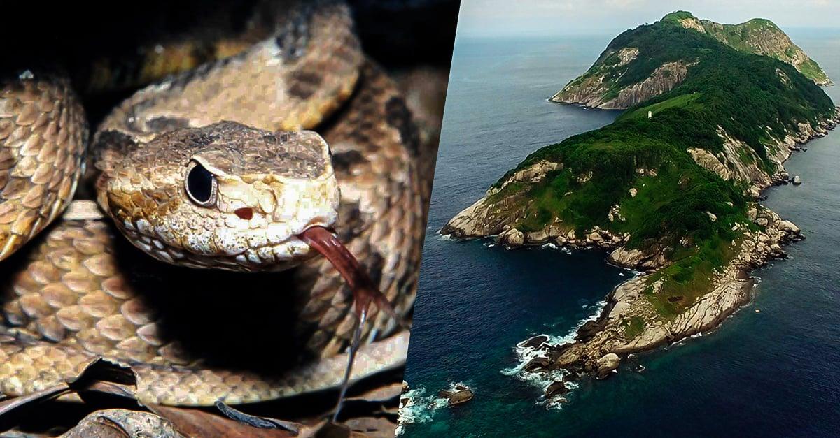 Isla de las cobras la isla ms peligrosa del mundo altavistaventures Choice Image