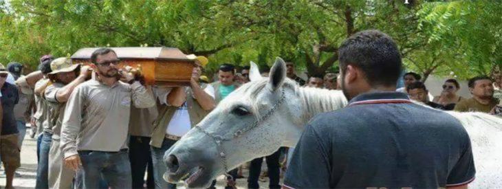 Caballo asiste a funeral de su dueño