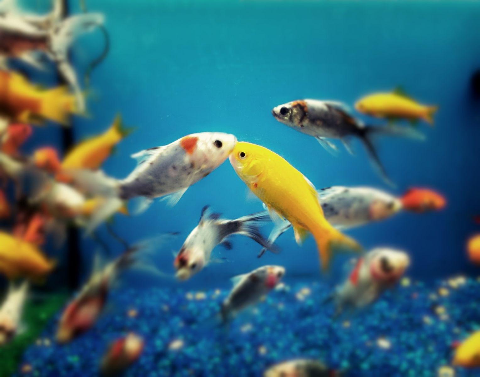 Hobbies que todo hombre debe tener parte 2 for Peces marinos para acuarios pequenos