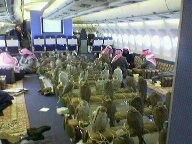 Halcones en un avión