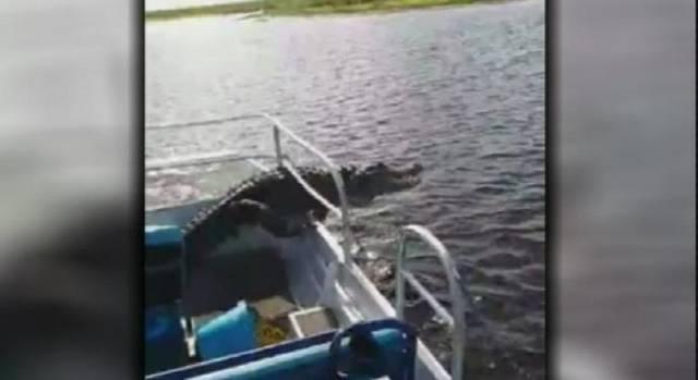 Caiman salta a un bote