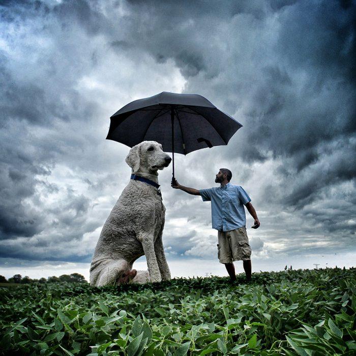 Clein protegiendo con un paraguas a Juji