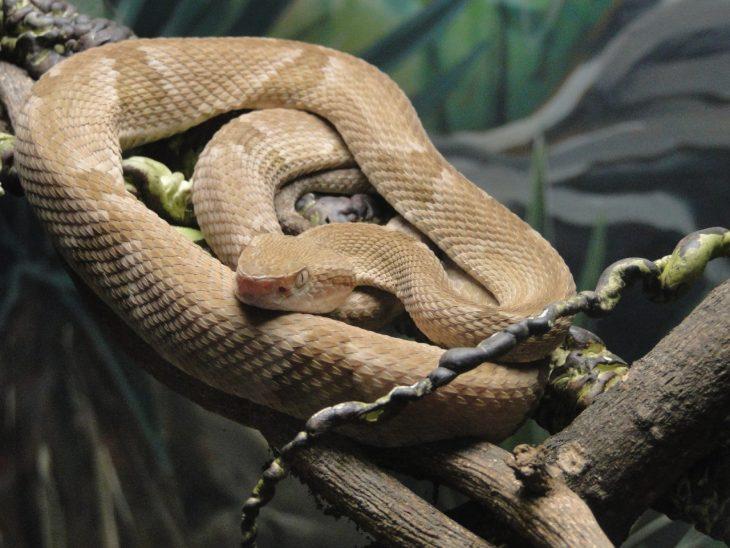 isla de las cobras