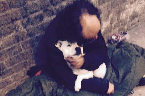 perro e indigente