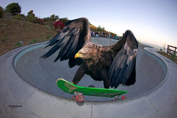 Batalla PS Águila patineta