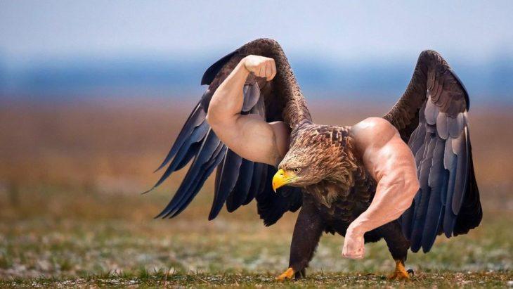 Batalla PS Águila músculos