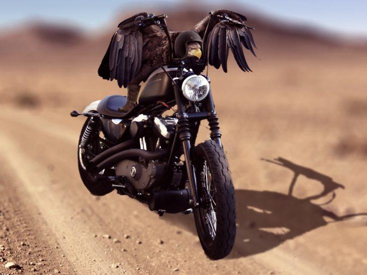 Batalla PS Águila moto