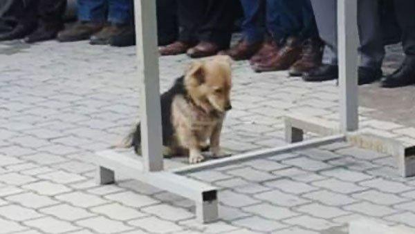 perro triste cabeza abajo