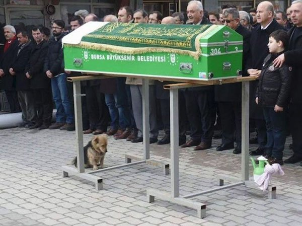 Cesur perrito triste
