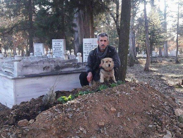Cesur perrito triste en panteón