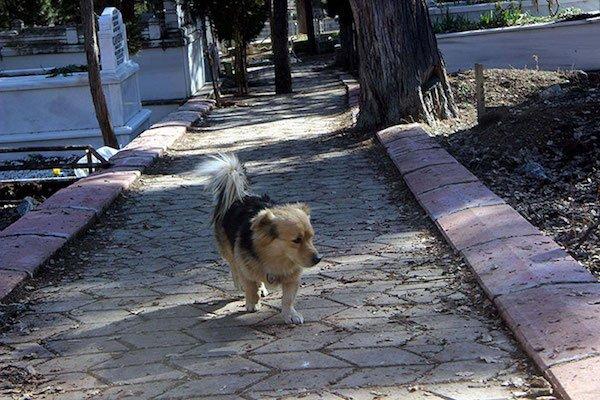 Cesur perro panteón