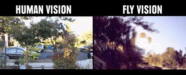 Vision mosca comparación vista con el humano