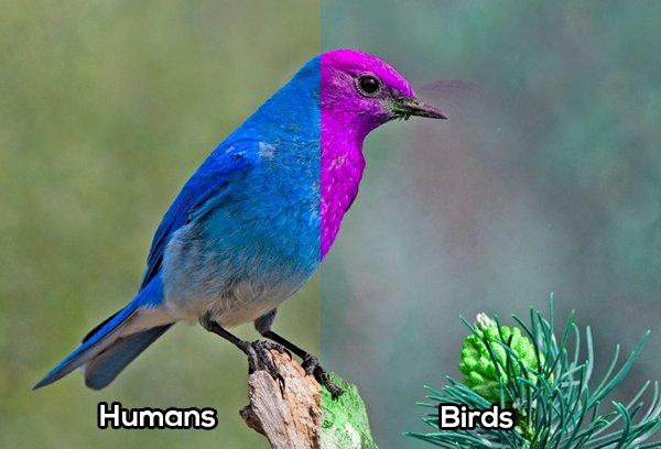 Aves comparación vista con el humano
