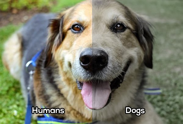 Perro comparación vista con el humano