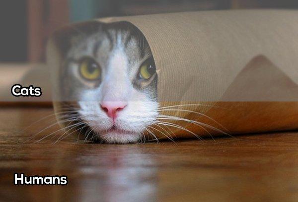 Gatos comparación vista con el humano