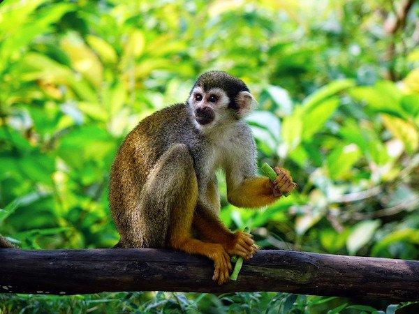 Mono araña en árbol
