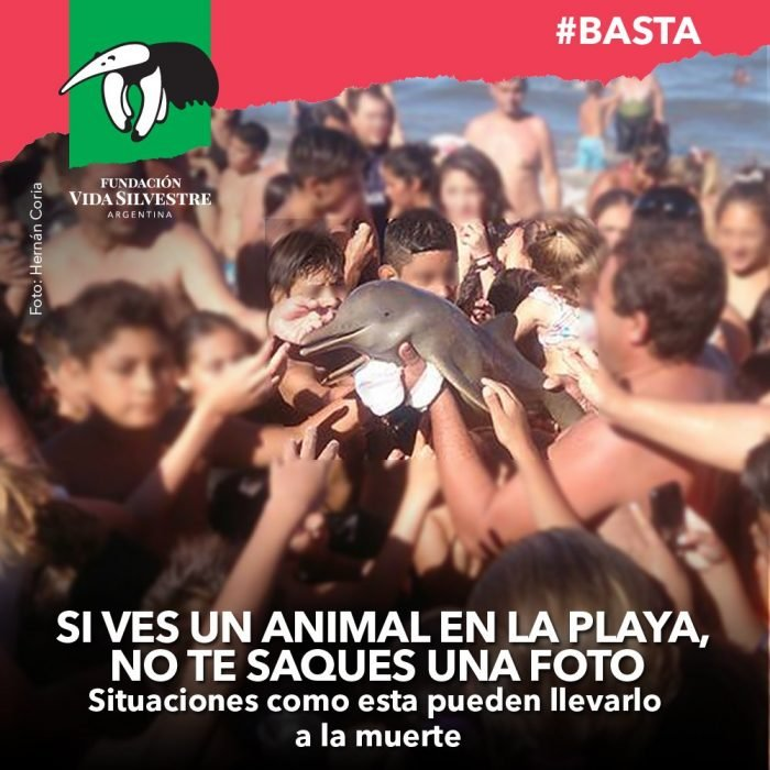 Flyer Fundación Vida Silvestre