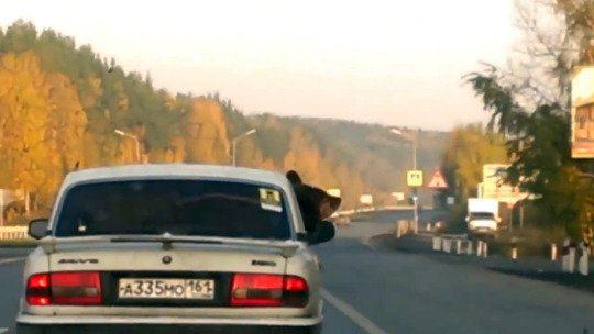 oso en carro