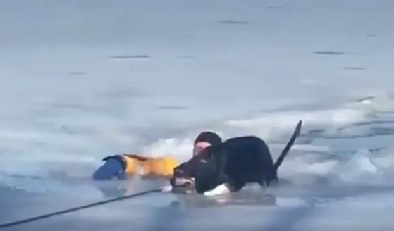 Perrito atrapado en hielo