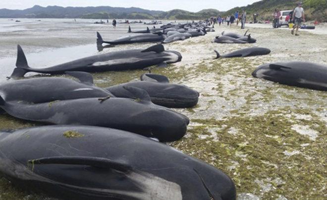 Ballenas varadas