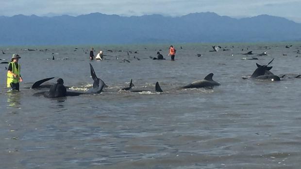 Ballenas en la bahía