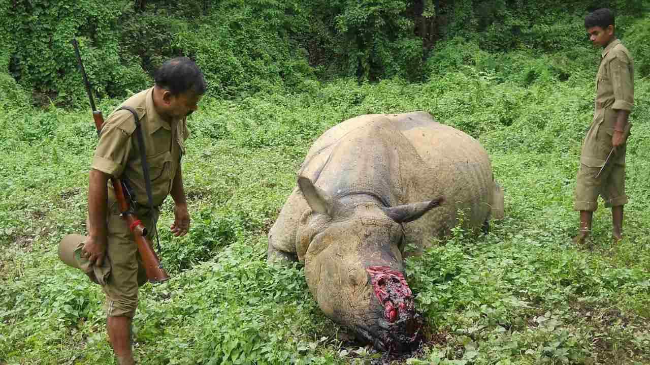 disfunción eréctil del rinoceronte
