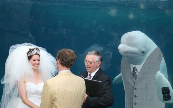 ballena beluga padrino