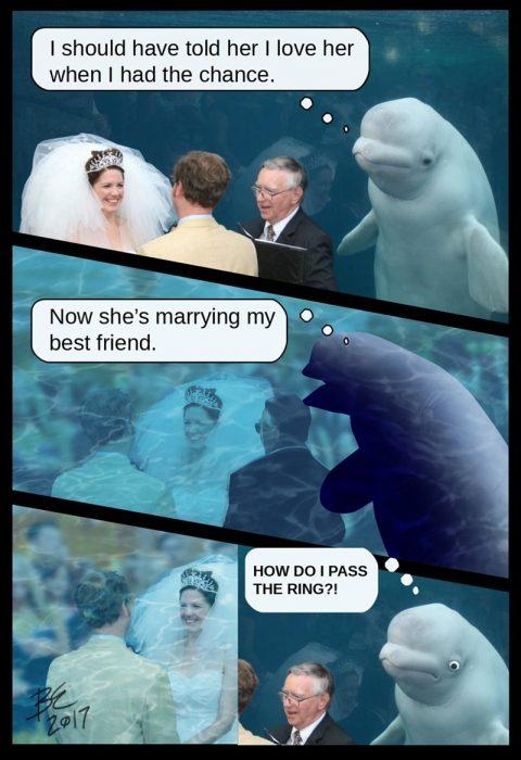 ballena beluga anillo