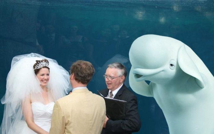 ballena beluga oidos