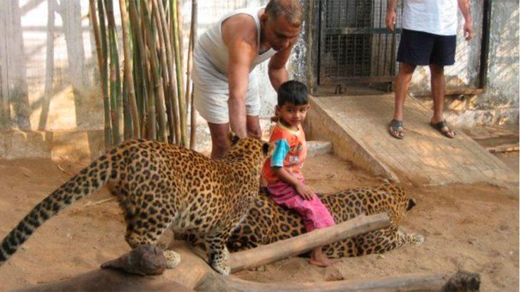 Dr. Pakash con nieto y pumas