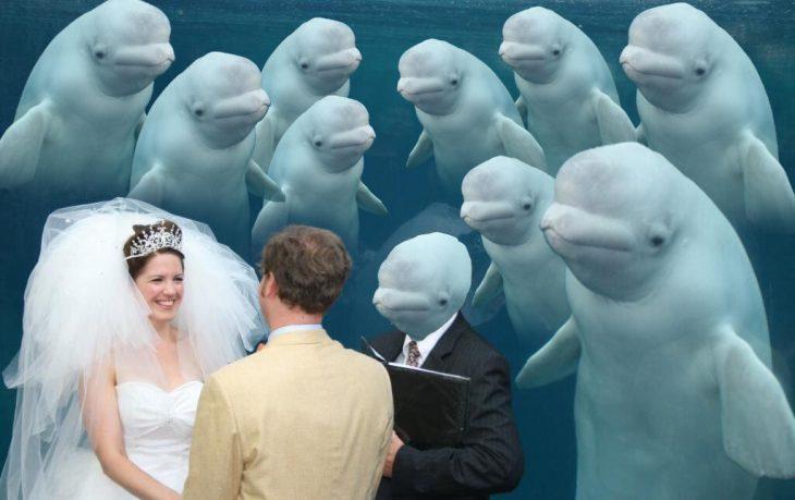 ballena beluga todos